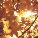 Ősz... az évszak, mely arra tanít, hogy a változás is lehet gyönyörű!