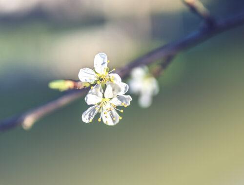 Mi-hal-meg-és-mi-támad-fel-benned-húsvétkor